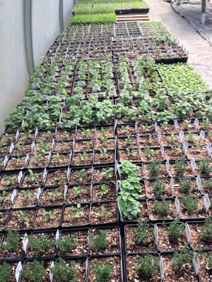 April Seedlings