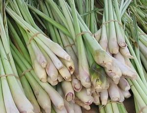 Lemongrass-stalks
