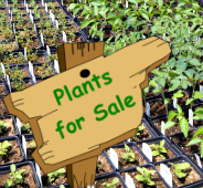 Plants-For-Sale