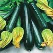 Black Zucchini