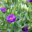 harry-flower-thumb