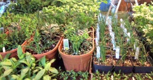 hattie's plants